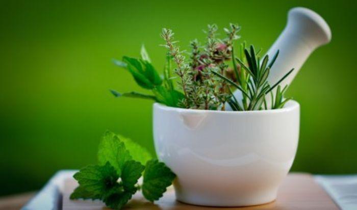 Herbal Medicine article image