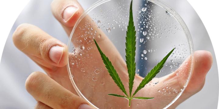 $199 Medical Cannabis Certification - Partner Offer Image