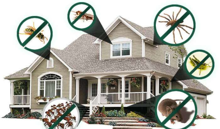 Residential pest control in Fullerton, CA article image