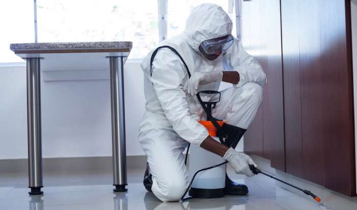 Commercial pest control in Fullerton, CA article image