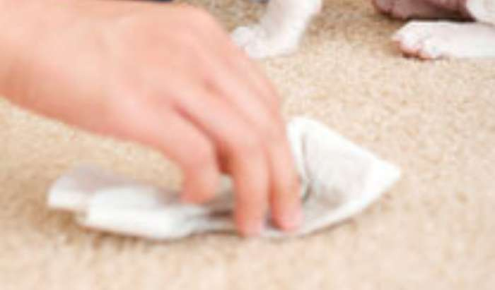 Stain & Odor Removal article image