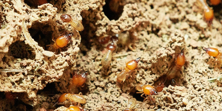 FREE Termite Inspection offer image
