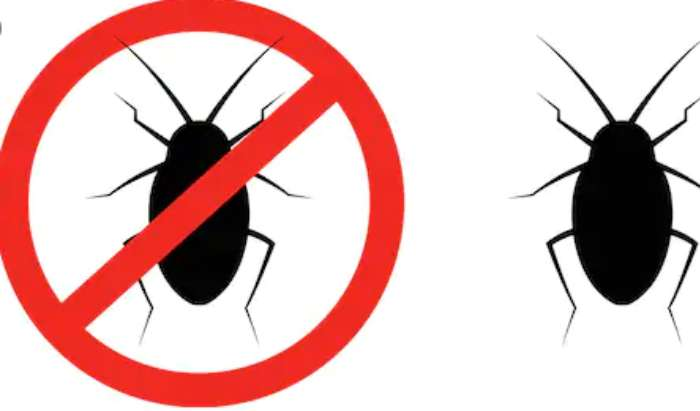 Additional pest control in Fullerton, CA article image